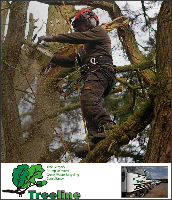 Treeline, tree felling, tree fellers, tree surgery, tree surgeon, Dublin, Kildare, South East, site clearance, stump removal, green waste recycling
